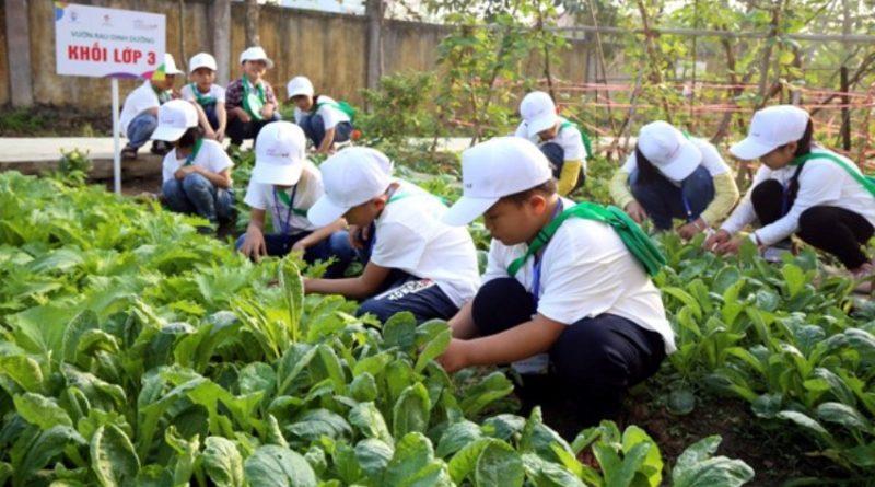 Các em học sinh cùng thực hành chăm sóc rau ở Vườn Rau Dinh Dưỡng, trường tiểu học Tống Phan